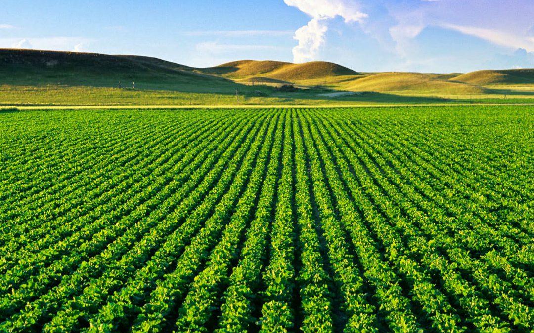 Governo finaliza projeto que libera venda de terra a estrangeiros
