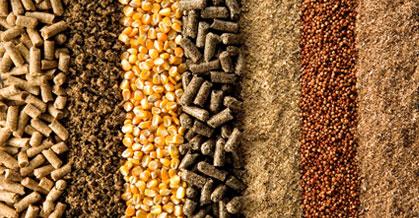 AveSui traz altos níveis de debates em nutrição animal