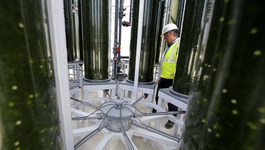 Produção industrial de biopetróleo poderá funcionar em três anos, em Portugal