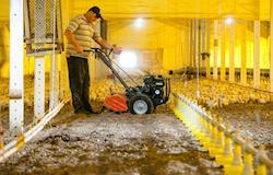 Equipamentos auxiliam o manejo da cama aviária para maior eficiência na produção