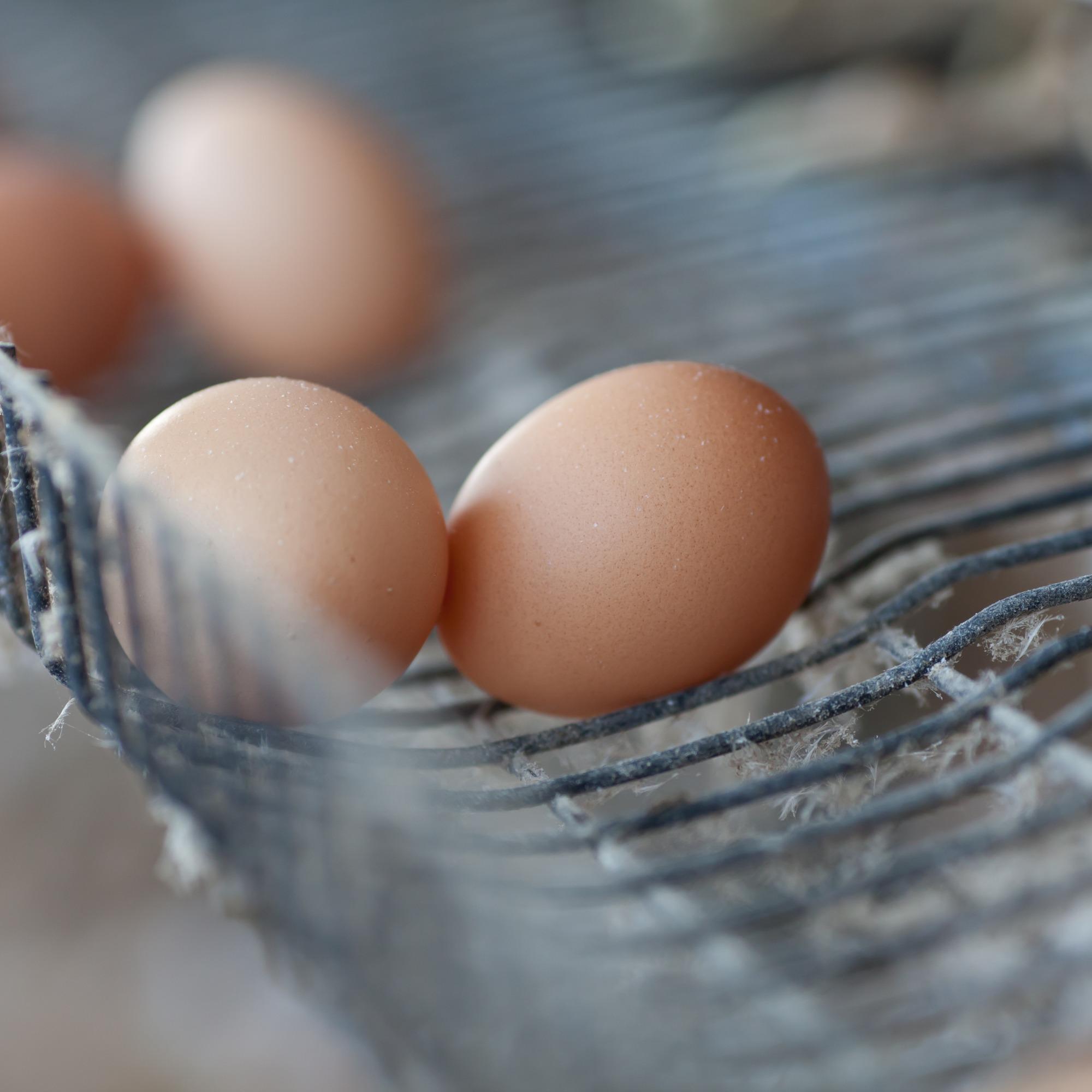 Com menor demanda, preços dos ovos caem