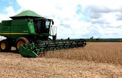 Aumento nas vendas de óleo e farelo de soja sustenta valor do grão