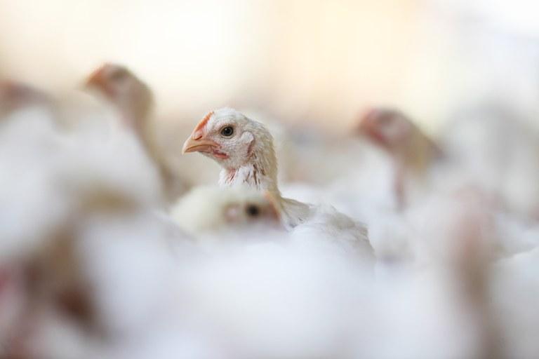 Ministro diz que Brasil não vai avançar na questão de bem-estar animal nesse momento