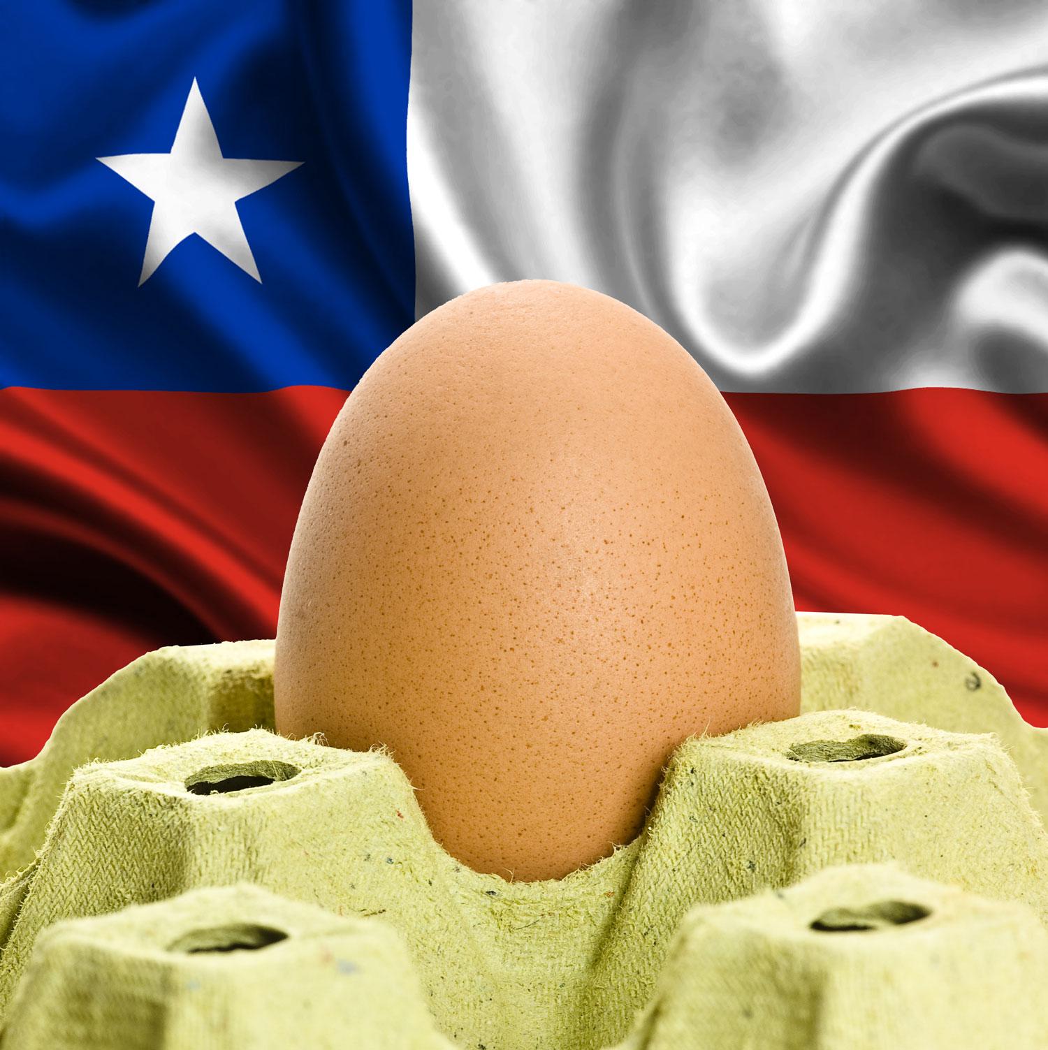 Chile tem potencial para se somar aos maiores importadores avícolas do Brasil
