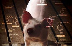 Salmonella e seus mecanismos de ação