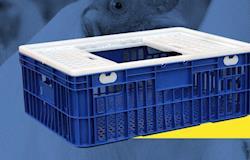 Transportar aves em gaiolas assegura qualidade e rendimento das carcaças