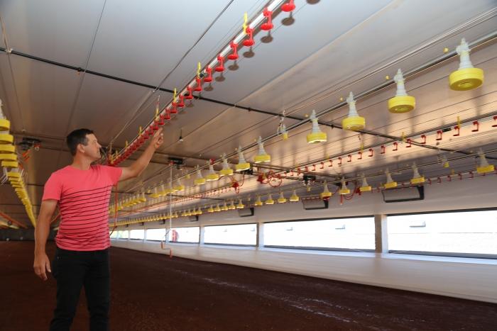 Avicultores buscam em cooperativas financiamento para investir na produção