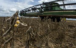 Agricultores do Matopiba mantêm cautela, mas alcançam boa produtividade