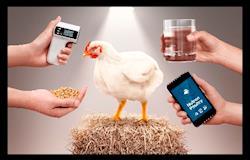 Plataforma para maximizar potencial produtivo da avicultura brasileira é lançada