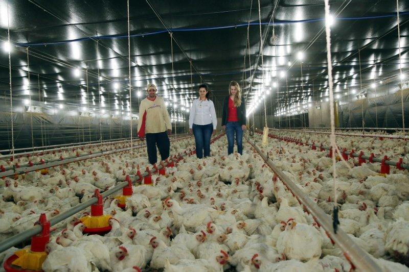 Produtor alcança recorde individual de R$ 1,38 por cabeça de frango